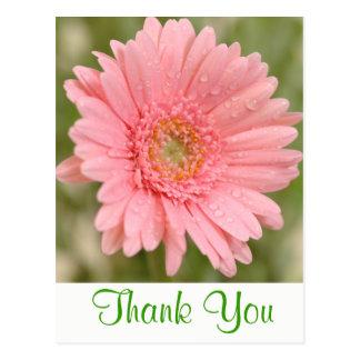 Floral Green Thank You Pink Gerbera Daisy Flower Postcard