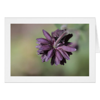 Floral greeting card with purple columbine flower