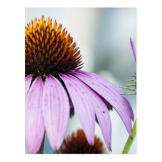 Floral Harmony Postcard