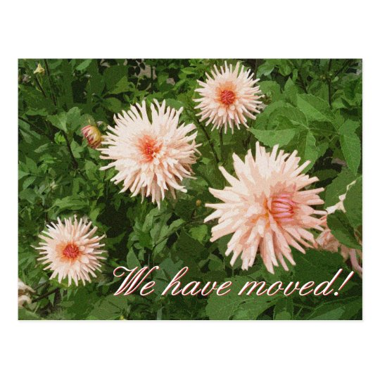Floral moving postcards with Chrysanthemum flower
