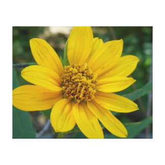 Floral Perfection in Sunshine Yellow Canvas Print