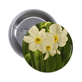 Floral Photography:  White Spring Narcissus 2 Inch Round Button