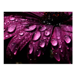 floral rain drops art design postcard