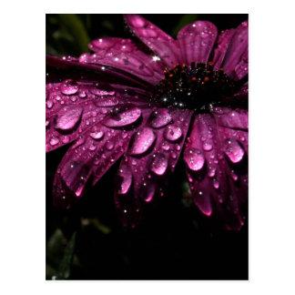 floral rain drops art design postcard