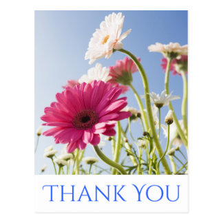 Floral Thank You Pink & White Gerbera Daisy Flower Postcard