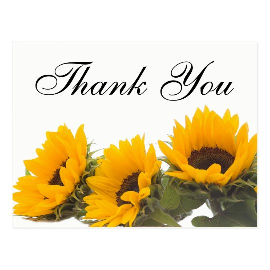 Floral Thank You Sunflower Yellow Green Flowers Postcard