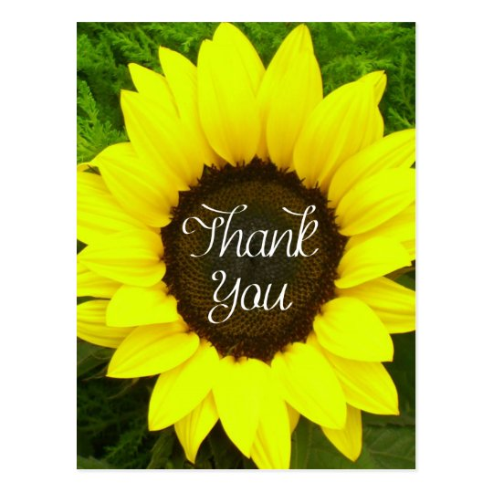Floral Thank You Sunflower Yellow & Green Flowers Postcard