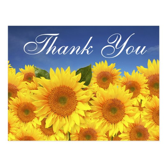 Floral Thank You Sunflowers Yellow Blue Flowers Postcard
