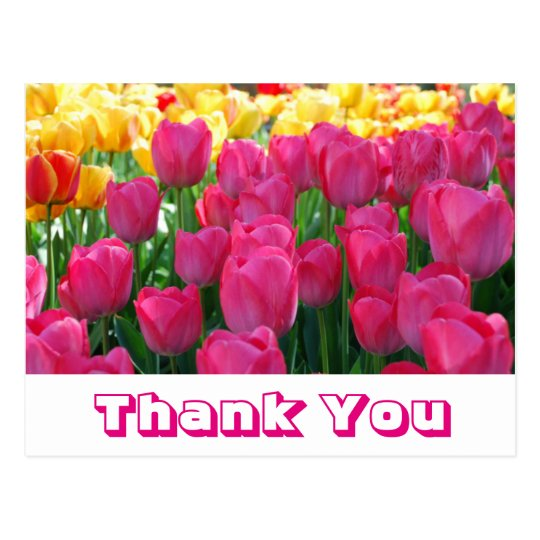 Floral Thank You Yellow & Pink Tulip Flowers Postcard