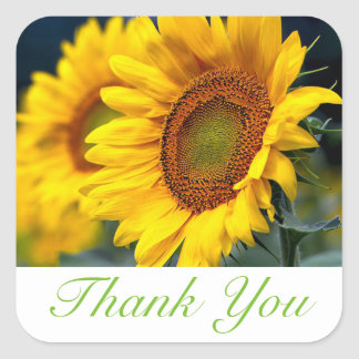 Floral Thank You Yellow Sunflower Flower Square Sticker