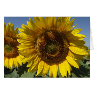 Floral Yellow Sunflower Flower - Thank You , Hello Card