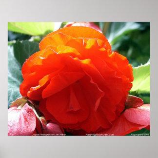 Floralscape/JDA030408107 Poster