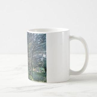 floresta canecas