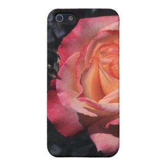 Floribunda Rose Sheila's Perfume iPhone 5/5S Covers