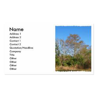 Florida Bald Cypress on a swampy ranch Business Card
