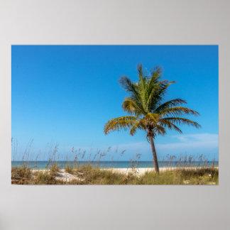 Florida beach palmtree poster