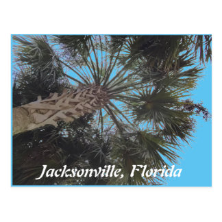 Florida beach Postcard - Palm tree