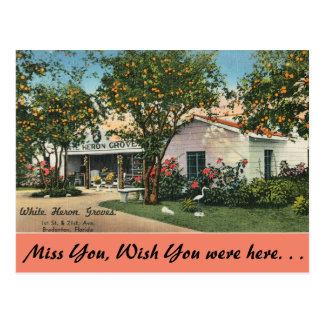 Florida, Bradenton, White Heron Groves Postcard
