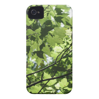 Florida Canopy iPhone 4 Case-Mate Case