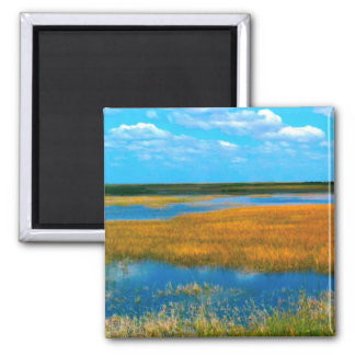 Florida Everglades - Magnets