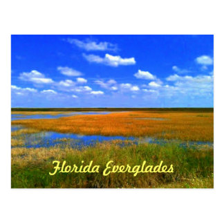Florida Everglades Postcard