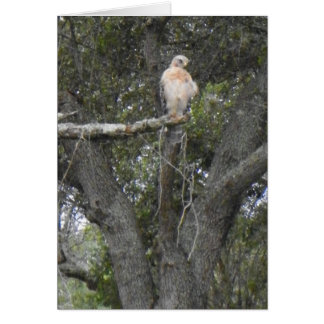 FLORIDA FALCON Notecard