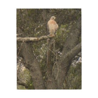 FLORIDA FALCON Wood Wall Art