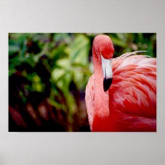Florida Flamingo 1 Poster
