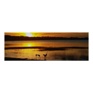 Florida Lake Dora Sunset with Sand Crane Birds Poster