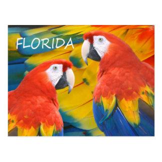 Florida Macaws Postcard