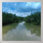 Florida Mangroves Poster