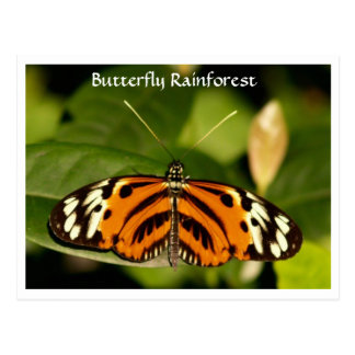 Florida Museum  Butterfly Rainforest Postcard