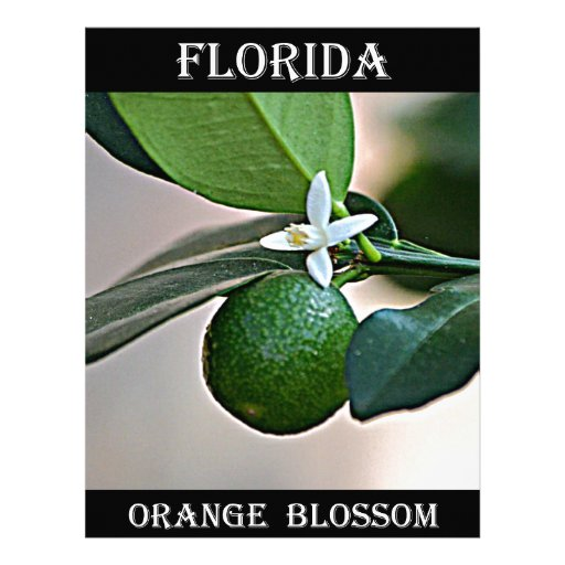 Florida Orange Blossom and small Orange Letterhead Template