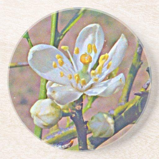 Florida Orange Blossom Coaster