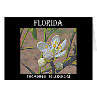 Florida Orange Blossom Greeting Card