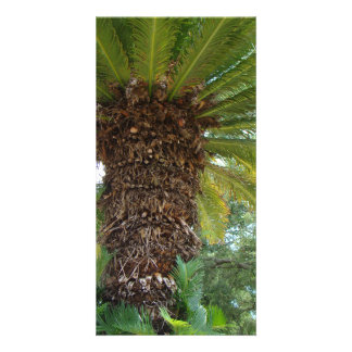 Florida Palm Personalized Photo Card