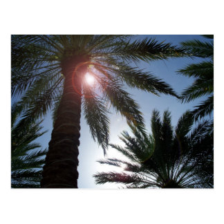 Florida Palm Trees in the Sun Post card