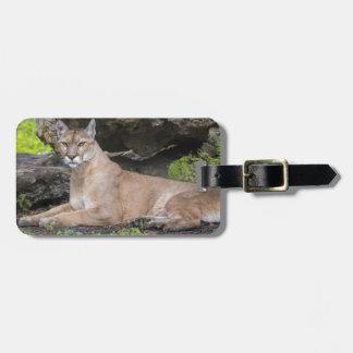Florida Panther Luggage Tag