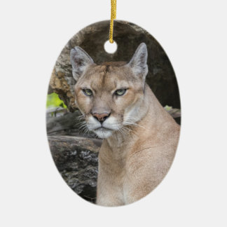 Florida Panther Ornament