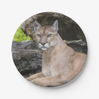Florida Panther Paper Plates 7 Inch Paper Plate