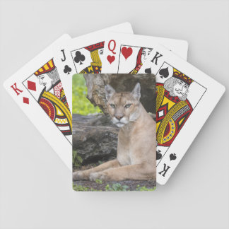 Florida Panther Playing Cards