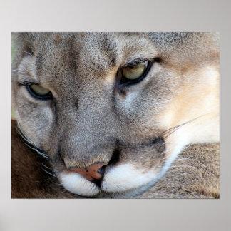 Florida Panther Poster (4071)