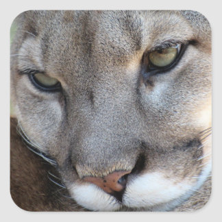 Florida Panther Sticker (4071)