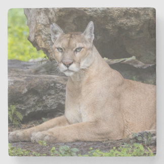 Florida Panther Stone Coasters