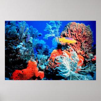 Florida Reef Poster