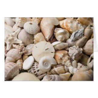 Florida Sea Shell Background - Beach Shells Custom Card