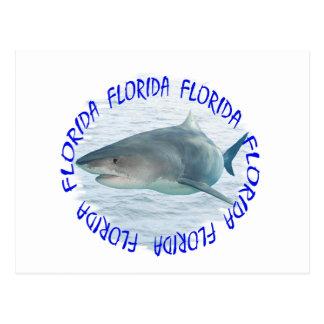 Florida shark postcard