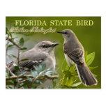 Florida State Bird - Mockingbird Post Cards