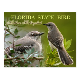 Florida State Bird - Mockingbird Postcard