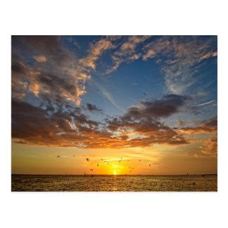 Florida Sunset - Postcard